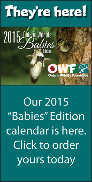 Buy the 2015 Babies Calendar